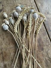 14 English Dried Flower Seed Heads & 12 Wheat - Floral Design/Crafts etc