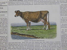 The Cultivator & Country Gentleman, in-text illustration #35 Jersey Cow