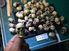 1/6 Scale Human Skull  Resin Set of 10 Painted