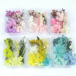 1Box Real Dried Flower For DIY Art Craft Epoxy Resin Pendant Jewellery Making .N