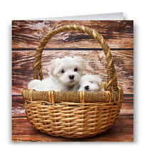 Cute Puppies In A Basket Birthday Card - Dog Maltese