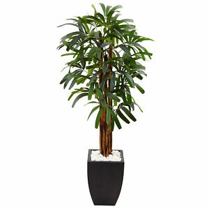 Raphis Plam Tree in Black Planter Realistic Plant Nearly Natural 5.5' Home Decor