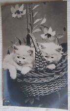 Cats 2 Turkish Angora Kittens in Cane Basket Vintage Rppc (d)From My Own Album