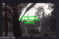 119292 AK Windhuk S.W. Afrika 1927 Fotokarte ev. Kirche Blick durch den Zoo