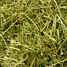 Dried Parsley Stalks 50g - 10kg, Rabbit Treat, Degu, Guinea Pig, Chinchilla