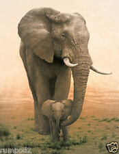 Animal Poster/Mother Elephant&Baby Illustration/Africa/Mother and Baby Elephants