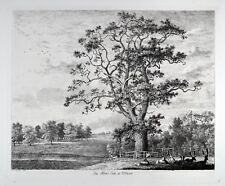 Jacob George Strutt 1822 - The Abbot's Oak at Woburn - Portraits of Forest Trees
