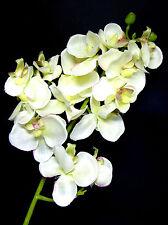 Orchideenzweig Phalenopsis - Classic Eco - Zweig 56cm lichtgrün