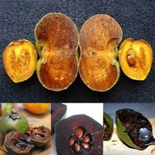 Diospyros Digyna BLACK SAPOTE Persimmon Chocolate Pudding Fruit 10 Seeds Rare