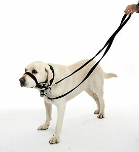 Double Ended Halti Training Lead For Dog Head Collar and No Pull Harness, Black