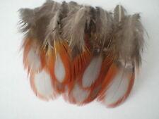 lot de 10 plumes faisan  tragopan 5 a 7  cm