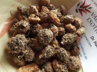 African Super Tigernut - Chufa - 25+ tubers - TASTY and YIELDING!