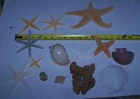 Mixed Rare Starfish, Dried Sea life Shells Craft collector Decor Lot # 28-L