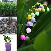 US-Seller 50pcs import bell orchid seeds, fragrant orchid all colors of flowers