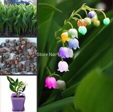 US-Seller 100pcs import bell orchid seeds, fragrant orchid all colors of flowers