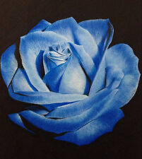 Light Blue Osiria Rose Heirloom Chinese Rose 80 Seeds--BUY 4 ITEMS FREE SHIPPING