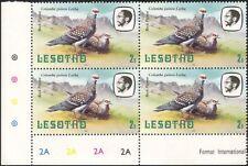Lesotho 1982 Rock Pigeon/Birds/Nature/Wildlife 4 x 1v c/b (a31)