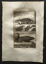 1799 - Buffon - Le souslik, le bobak - Gravure zoologie