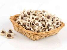 Moringa seeds x 300 seeds Organic