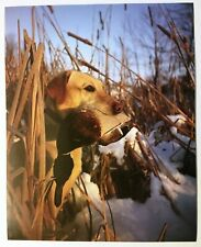 1989 Hunting Dog Holding Duck Lithograph Poster Print Vintage Wall Art Pointer