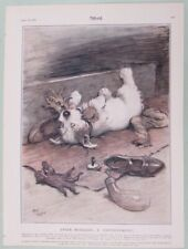 WOGGLES SERIES DOG PRINT BY CECIL ALDIN 1931 FROM THE SKETCH  CONTENTMENT