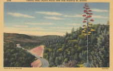 Linen Postcard A694 1959 Century Plant Agave Parryi seenfrom Highway 60 Arizona