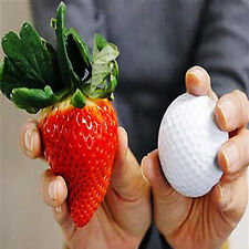 Super Giant Sweet Strawberry 100 Seeds Premium Seeds High Germination