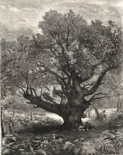 """Exhibition of The Royal Academy. """"The Monarch Oak"""". Trees, antique print, 1853"""