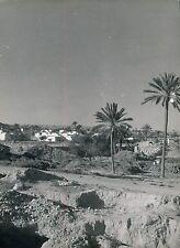 TUNISIE c. 1950 - 3 Photos Paysage - DIV1224