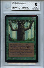 MTG Alpha Ironroot Treefolk BGS 6.0 (6) EXNM Card Magic the Gathering WOTC 9891