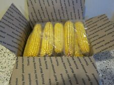 10Lb Bag Of Ear Corn For Birds-Squirrels-Other Wildlife. Free Shipping