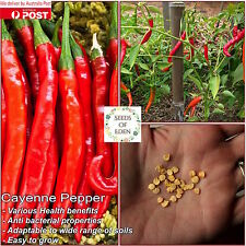 20 CAYENNE PEPPER SEEDS, high yielding variety & hot flavour. HOT (HEAT: 8/10)