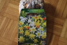 25 Blumenzwiebeln Narzissen, Pigmy Mischung,BZ102