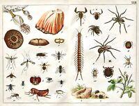 1887 SCHUBERT CHROMO #23 ARTHROPODS/Arachnids/Barnacle/Flies/Flea/Mites/Spiders