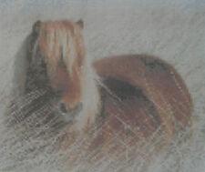 Shetland Pony Counted Cross Stitch Kit