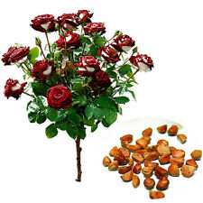 20x/Bag Rare Seed Osiria Rose Ruby Rose Flower Seeds Home Garden Plant Seeds