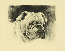 Kurt Meyer-Eberhardt Radierung englische bulldogge bulldog echting e