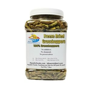 Grasshoppers- Freeze Dried Grasshoppers with FREE $7.99 Freeze Dried Gourmet Mix