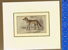 LIZARS Hand Colored 1843 - AGUARA - DOG OF THE WOODS
