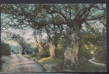 Buckinghamshire Postcard - Burnham Beeches   RS9580
