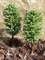 """10-STÜCK Jordan Bäume LAUBBÄUME GRÜN mit Fuß 10cm """"MADE in GERMANY"""" 3-5"""