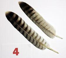 2 x Rotnackenshahin Falke SET 4 Falkenfedern mit Cites Feder