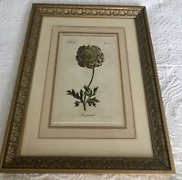 Wall Decor: Botanical print - Ranunculus. Framed 18'x14'