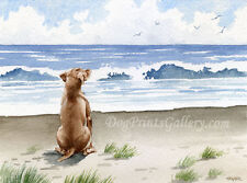 Hungarian Vizsla Dog Watercolor 8 x 10 Art Print Signed by Artist Djr
