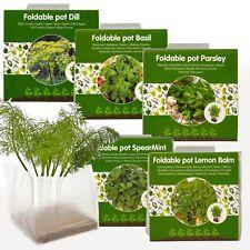 5 Semillas Hierbas crecer su propio kit de interior Veg Maceta planta de invernadero Jardín Conjunto
