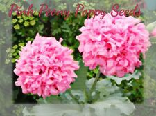 Pretty Pink Peony Poppy Seeds  200 plus seeds in each pack