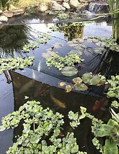 Bundle of 10 Mixed Floating Pond Plants For $25