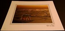 Animal Photo Print - 8x10 - Polar Bear on Ice @ Sunset - New, Matted -Hq Gift