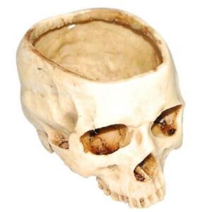 Skull Pot Decoration Flower Seeds Planter Resin Craft Home Office Decor Idea