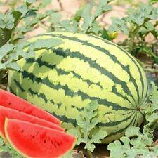 Giant Watermelon Seeds Bonsai Red Meat Garden Vegetables Plants Fruits 50Pcs
